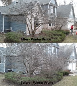 Winter Prune