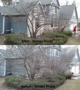 Winter Prune
